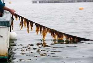 seaweedfarming_custom-8db52a061c03ff0c8769a6554605482d7ac52eb6-s800-c85
